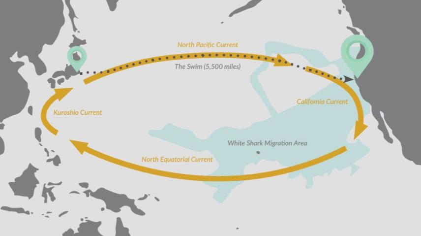 Longest Swim Map