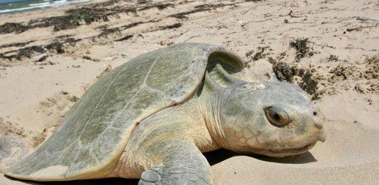 Ponte des tortues Floride